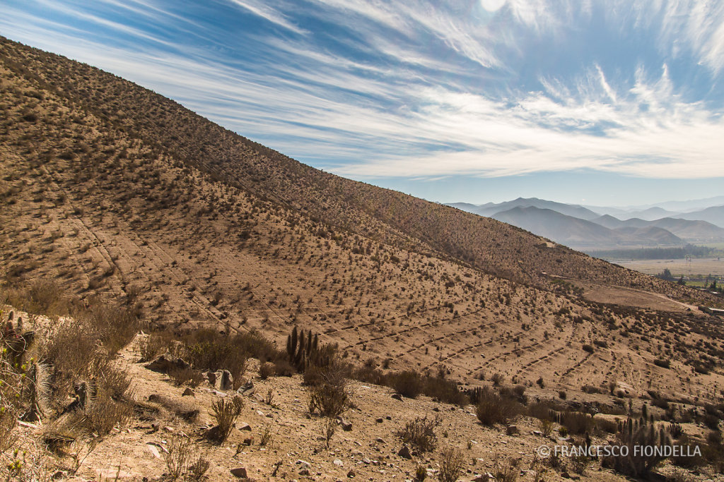 Drylands, Coquimbo