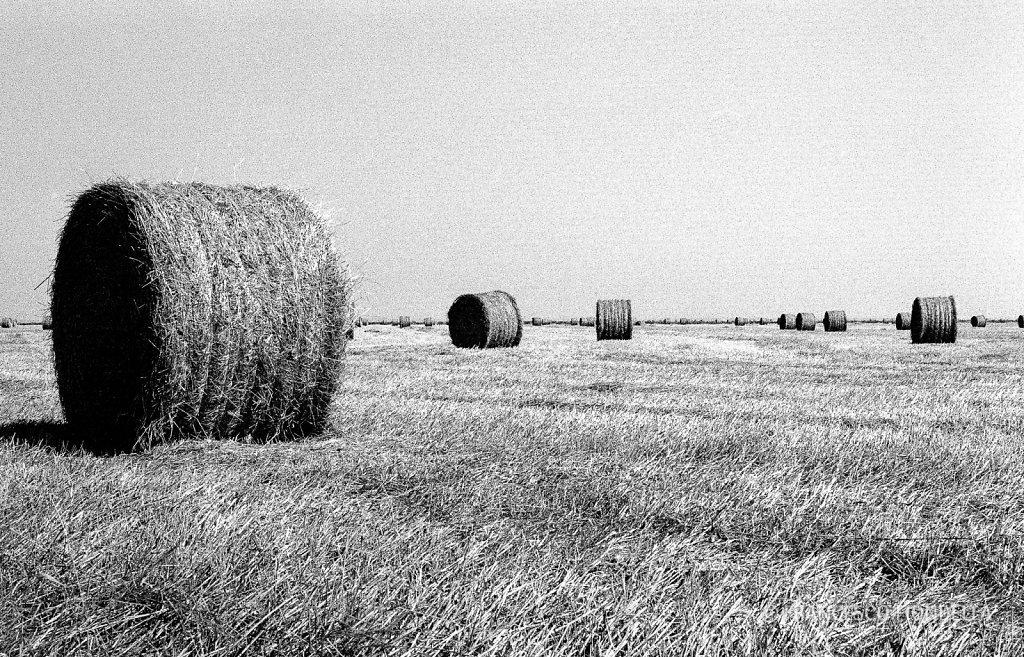 Doñana farmland