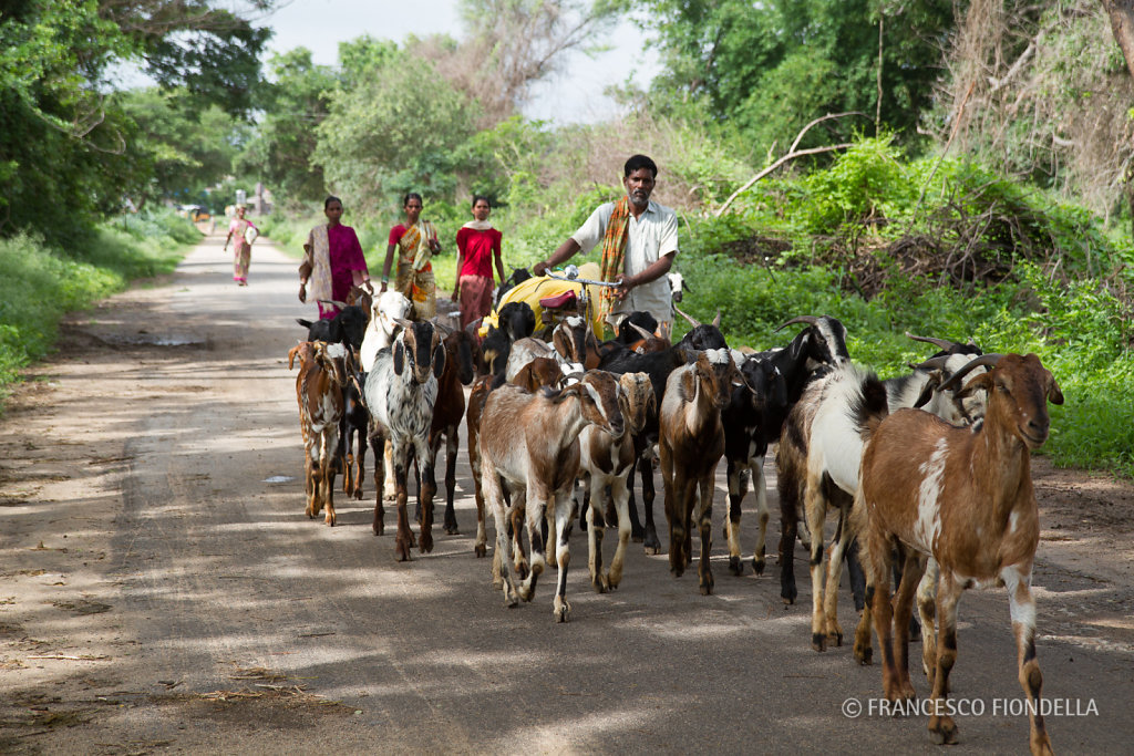 Off to goat pastures