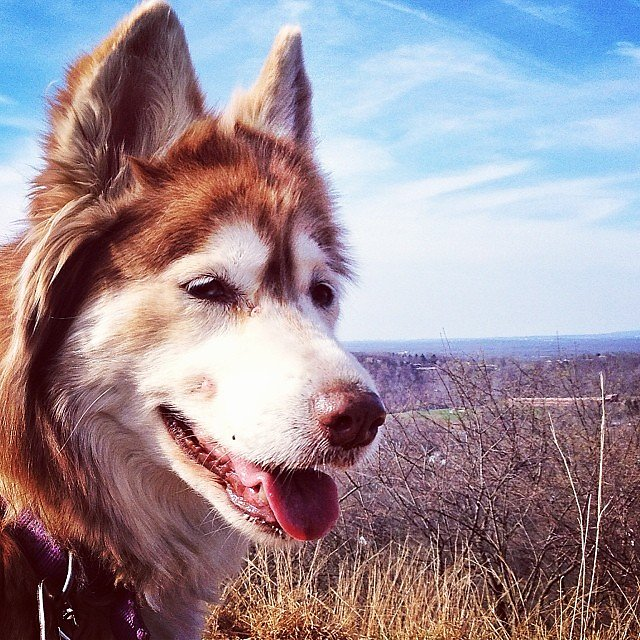 A dog named Poet on a mountain named Hook