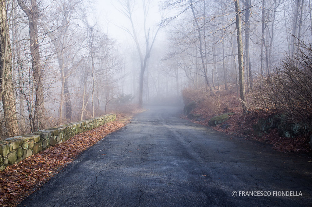Fog Walk - 7