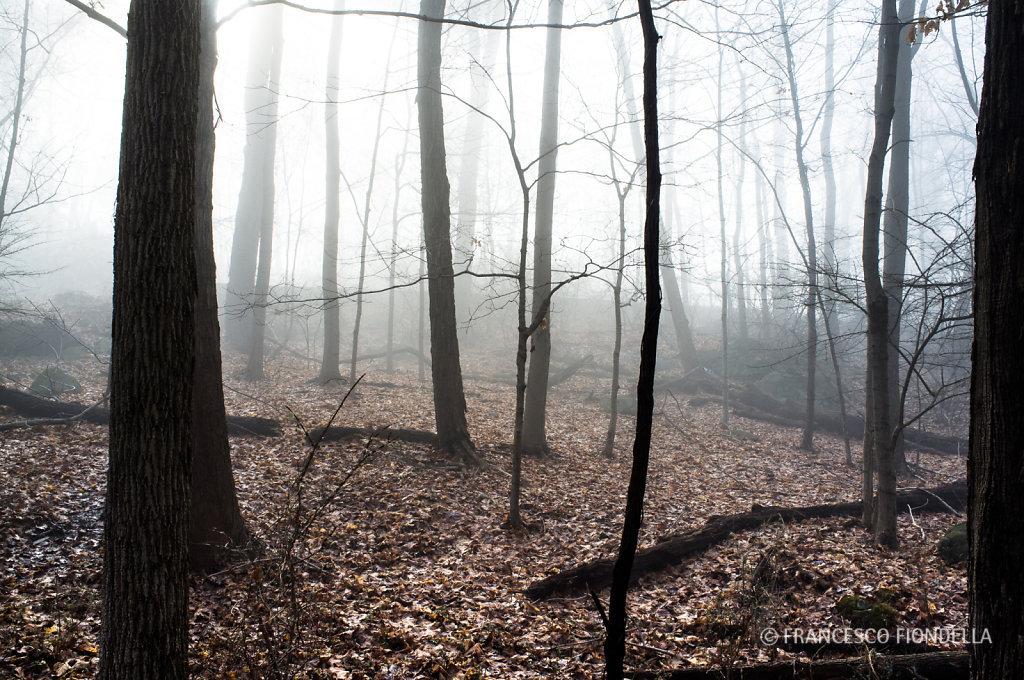 Fog Walk - 11